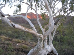 Mount Sondor, Larapinta Trail, West MacDonnell Ranges, NT